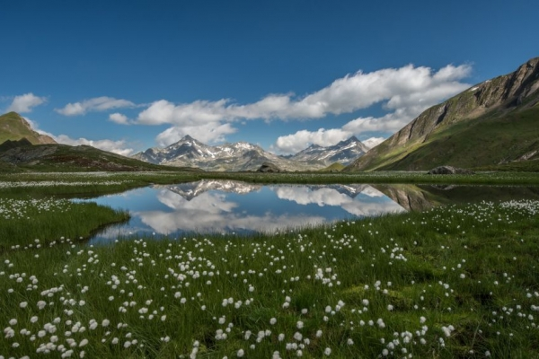 bergsee_sommer