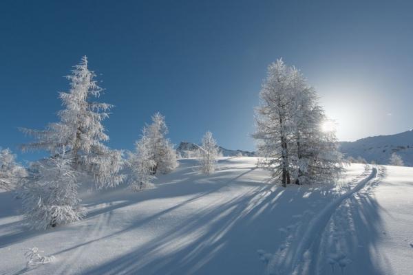 inverno_alberi